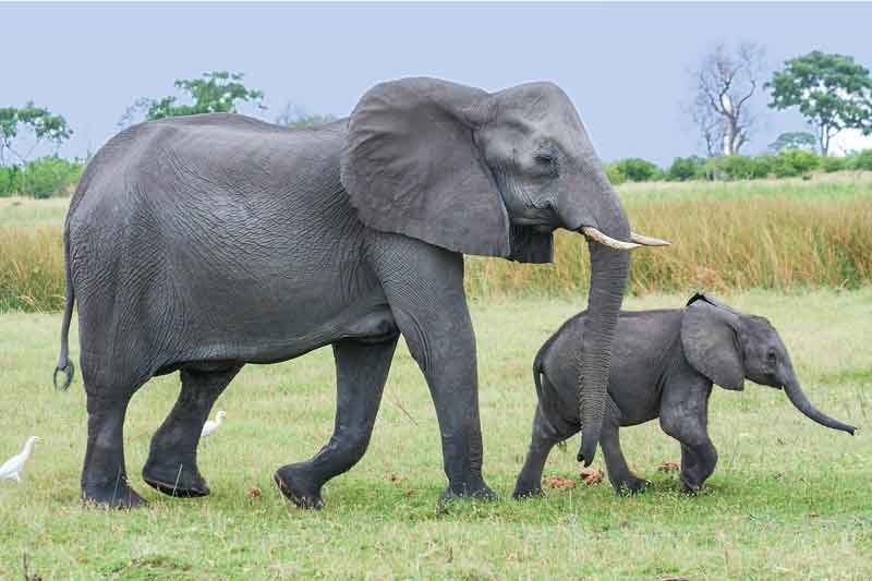 elephant-with-kid